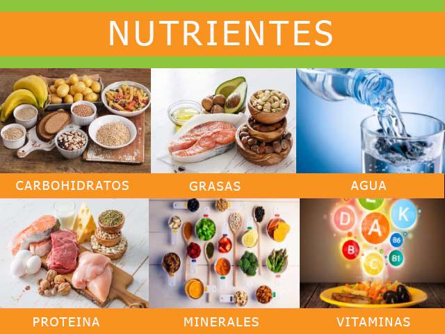 alimentos saludables nutrientes